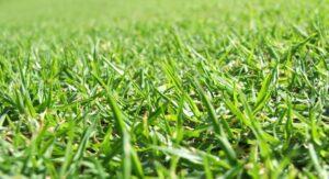 fertilizing programs
